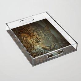 Predator Acrylic Tray