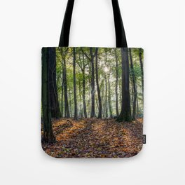 Beech Woodland Sunrise Tote Bag