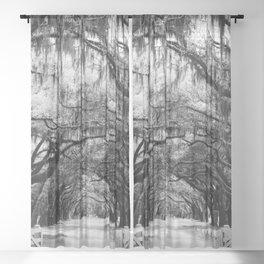 Spanish Moss on Southern Live Oak Trees black and white photograph / black and white art photography Sheer Curtain
