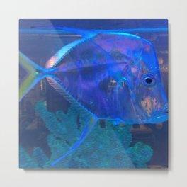 Silver Fish Metal Print
