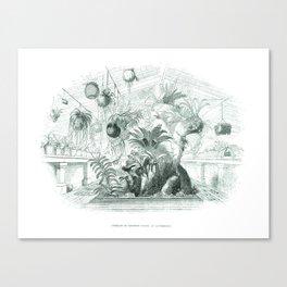 Vintage Botanical illustration, 1837 (Greenhouse) Canvas Print