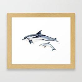 Striped dolphin Framed Art Print