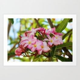 Pink Plumeria Art Print