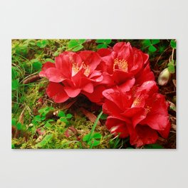 Fallen camellias Canvas Print