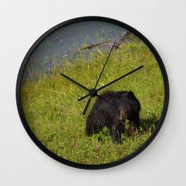 Bear cub emerges from Medicine Lake in Jasper National Park Wall Clock
