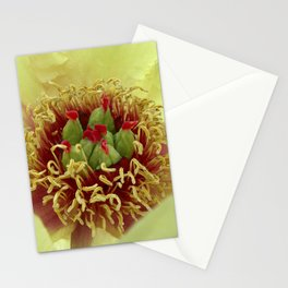 peony bloom macro XXIV Stationery Cards