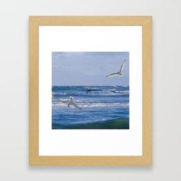 Terns diving into the ocean Framed Art Print