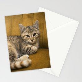 Cinnamon Tabby Kitten Stationery Cards