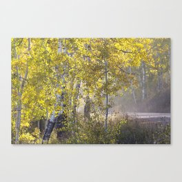Through the Aspen Forest Canvas Print