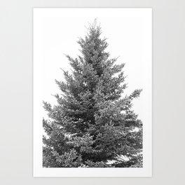 B&W White Spruce Art Print