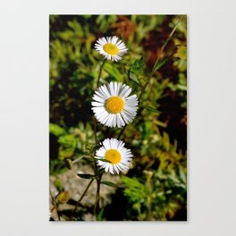 White Flower Canvas Print