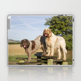 Italian Spinoni Dogs Woody & Ruben Laptop & iPad Skin