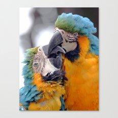 Kissing Macaw Canvas Print