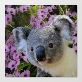 Koala and Orchids Canvas Print