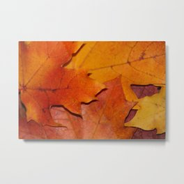 Ards Autumnal Colors Donegal Metal Print