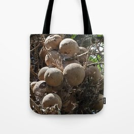 Cannonball Tree Fruit Tote Bag