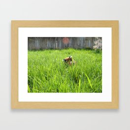 Backyard Wildlife  Framed Art Print
