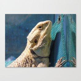 Lemmy the bearded dragon. Canvas Print