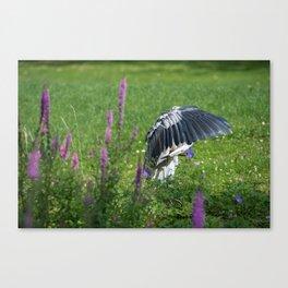 Welcome Heron Canvas Print