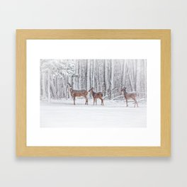 Winter Visits Framed Art Print