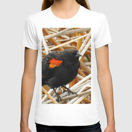 Juvenile Male Redwing Blackbird T-shirt
