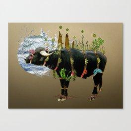 Water Buffalo Canvas Print