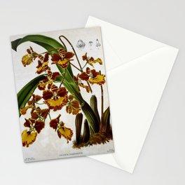 Flower oncidium praetextum2 Stationery Cards
