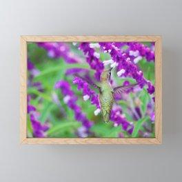 Purple Attraction Hummingbird by Reay of Light Framed Mini Art Print
