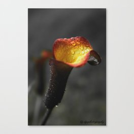 Solstice Lily Canvas Print
