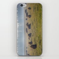 buffalo iPhone & iPod Skins featuring Buffalo by Claire Laminen Photo
