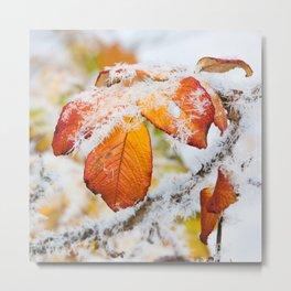 Rose bush frozen leaves Metal Print
