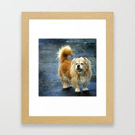 Small dog on the street Framed Art Print