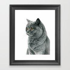 The Chartreux portrait G112 Framed Art Print