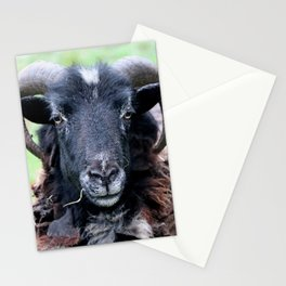 Sheep, a Horned Ram Stationery Cards