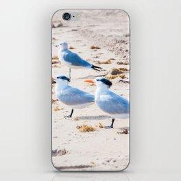 Beach Birds iPhone Skin