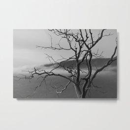 Serenetree Metal Print