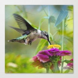 Sweet Hummingbird Canvas Print