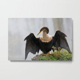 Anhinga or Snakebird Metal Print