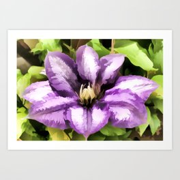 Painted Purple Flower - Clematis Art Print
