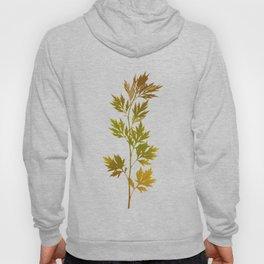the herbarium yellow Hoody