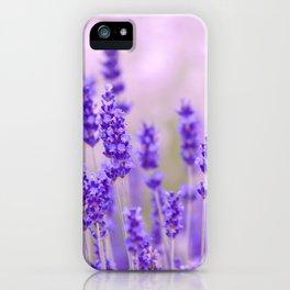Lavender, lavandula flowers iPhone Case