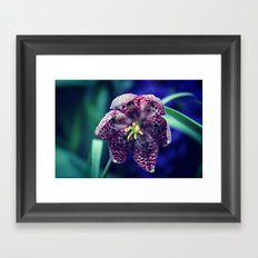 Spring Flower 07 Framed Art Print