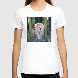 Buffy, the Celebrity Pomeranian, in Bamboo Forest T-shirt