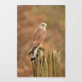 Perched Raptor Canvas Print