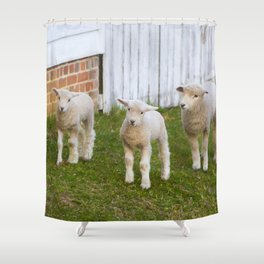 3 Little Lambs Shower Curtain