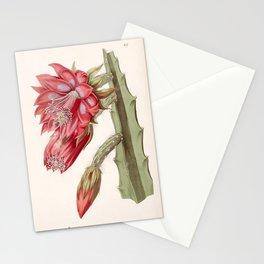 Disocactus speciosus/Cereus speciosissimus Stationery Cards
