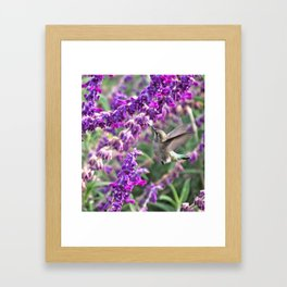 Hummingbird at Mexican Sage Framed Art Print