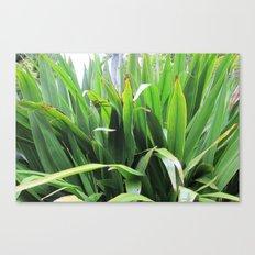 Flaxy Green Canvas Print