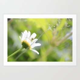 spiders touch Art Print