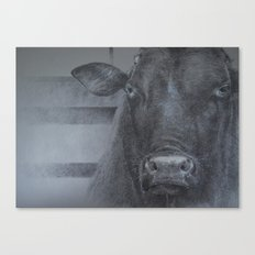 lots of bull Canvas Print